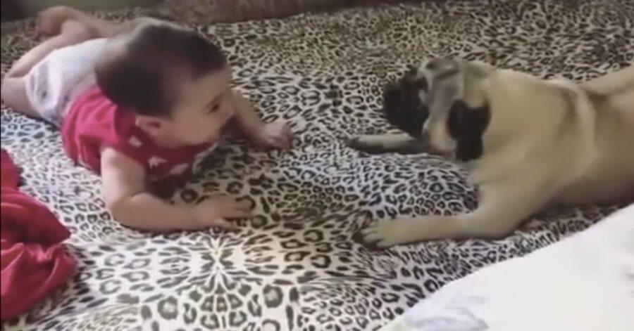 Carlino e bimba giocano insieme