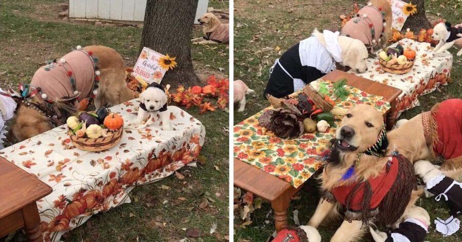 due foto cena ringraziamento cani