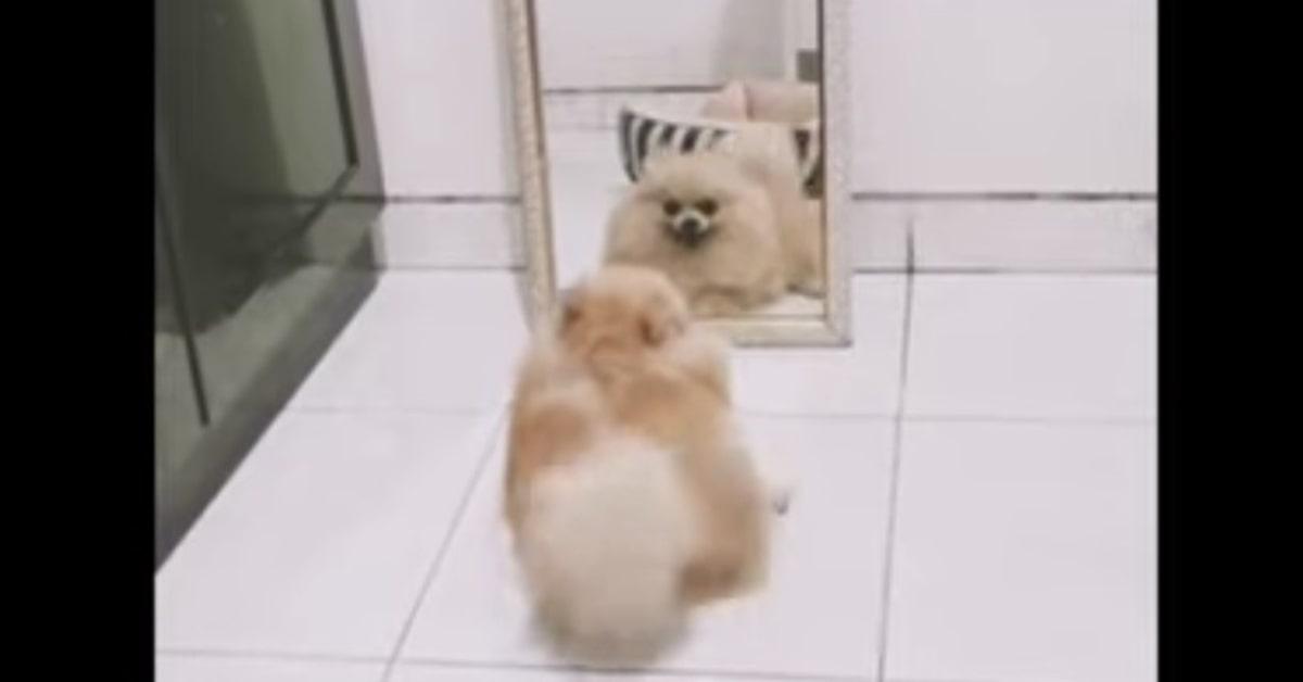 Chimmy sconvolto vedendosi allo specchio