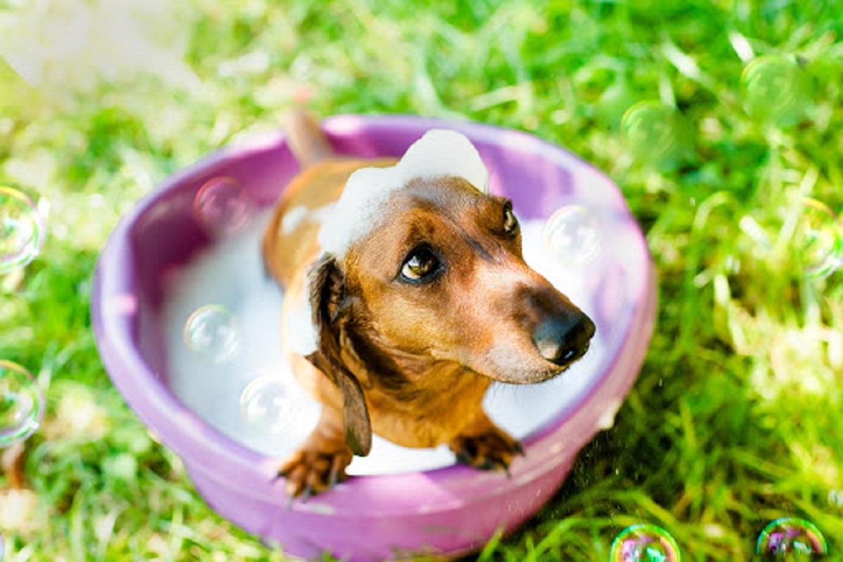 Come tosare un cane: consigli e metodi infallibili