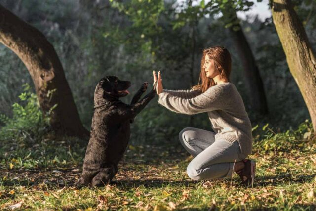 cane e ragazza si danno il cinque