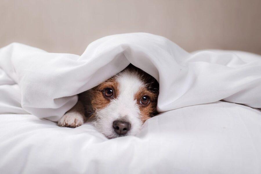 Il cucciolo di cane deve avere le sue coperte o no?
