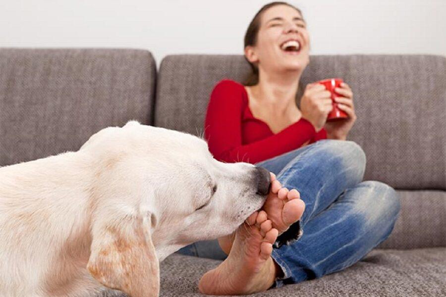 labrador lecca i piedi a una donna