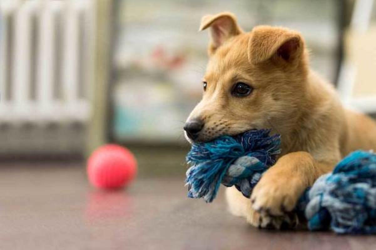 cucciolo di cane quanti giocattoli