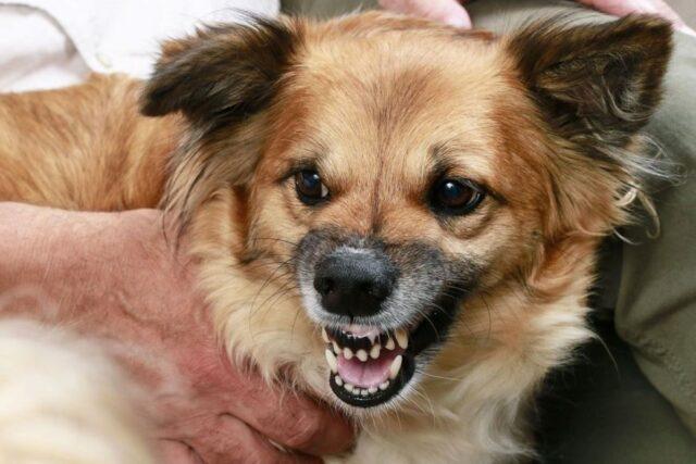 cucciolo di cane ringhia a tutti