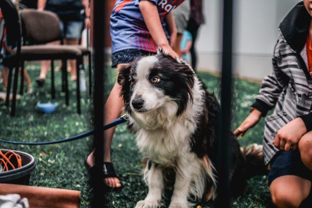 cucciolo di cane con bambini al parco