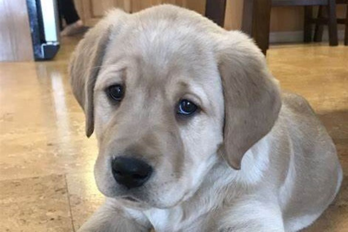 cagnolino triste