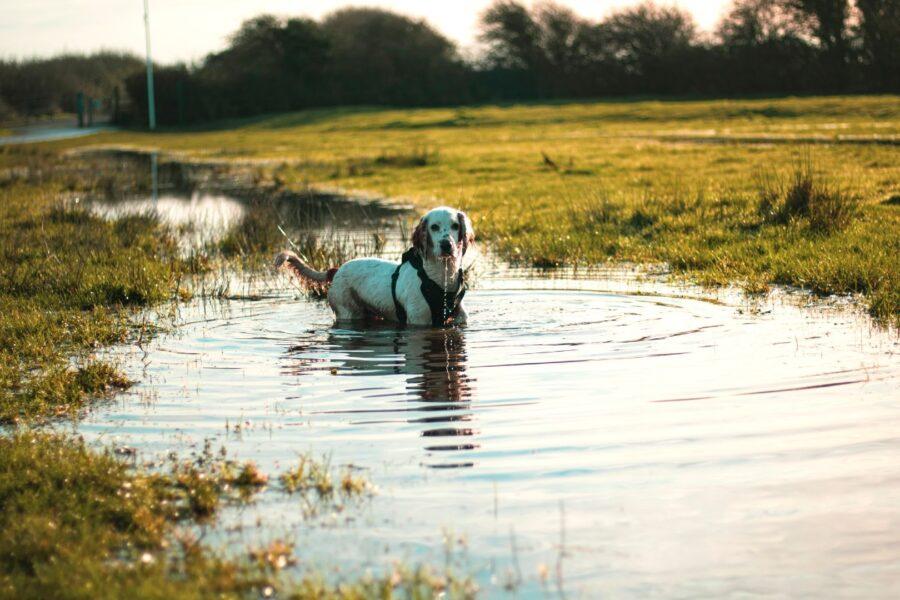 cucciolo nell'acqua sporca