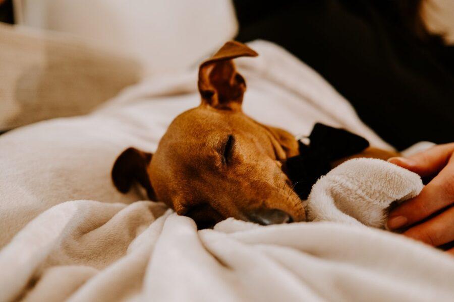 cucciolo di cane come svegliarlo
