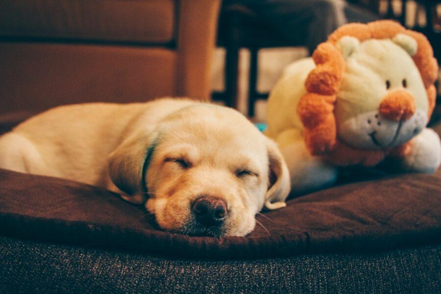 cane sul tappeto dorme