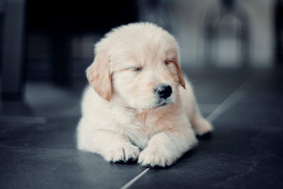 cucciolo appisolato