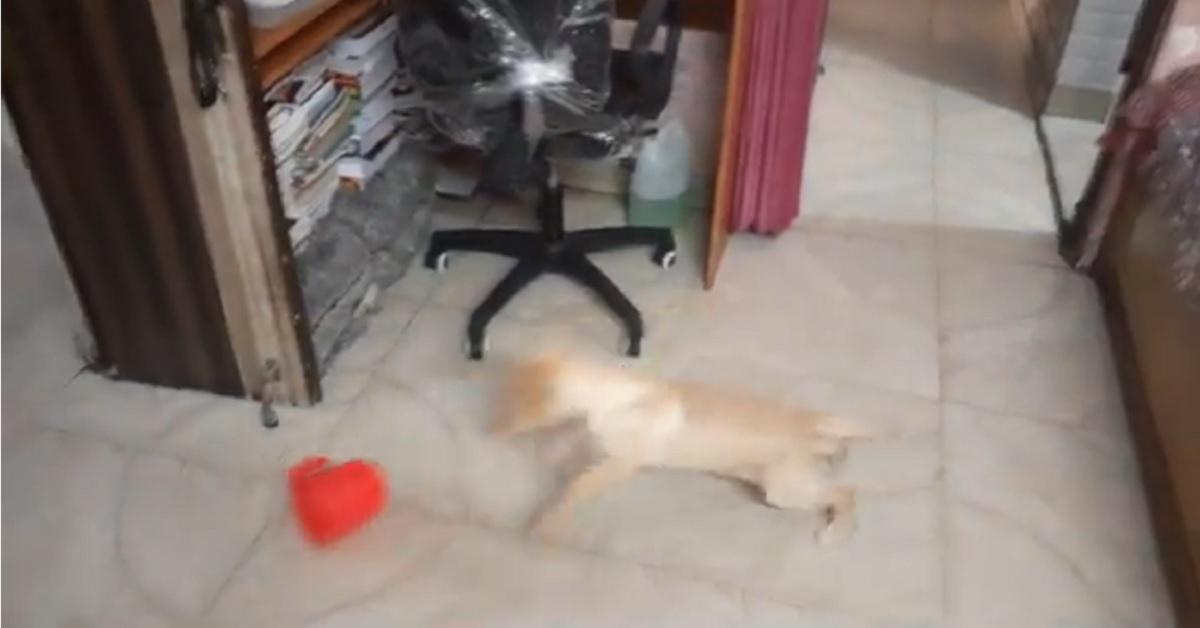 cucciolo di labrador gioca con una ciotola