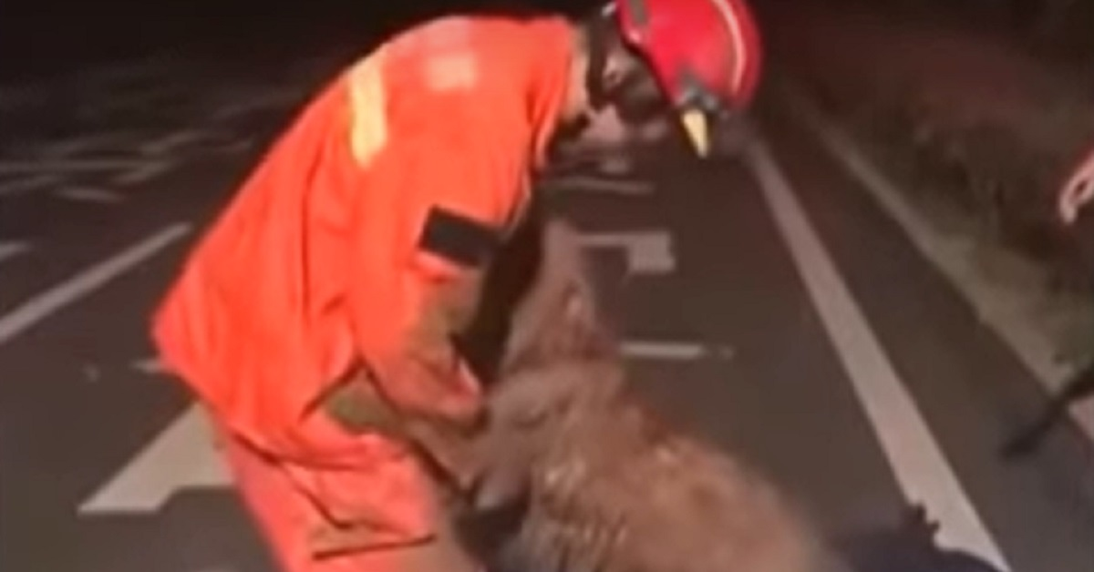 cucciolo cane salvo