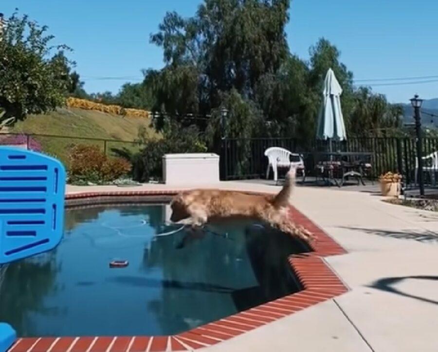 Cucciolo Golden Retriever sa come divertirsi in piscina, il video