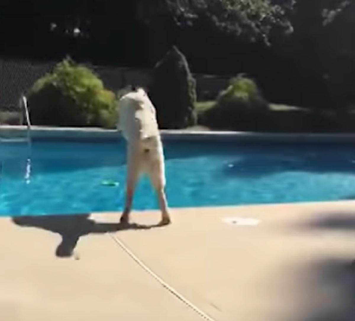 brody cucciolo si getta in acqua