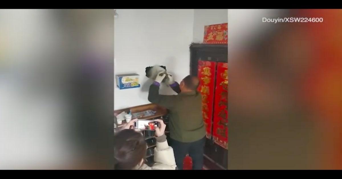 cucciolo salvato incastrato nella parete