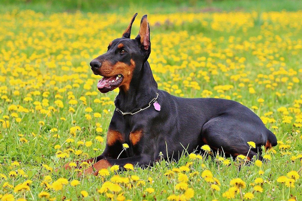 cane nei fiori