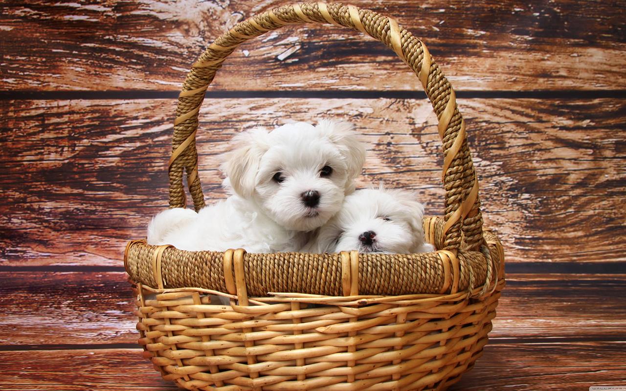 cagnolini in una cesta