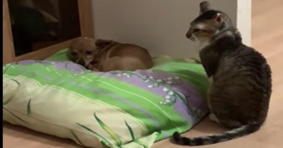 Un cucciolo di cane ignora un gattino che cerca in tutti i modi di attirare la sua attenzione (VIDEO)