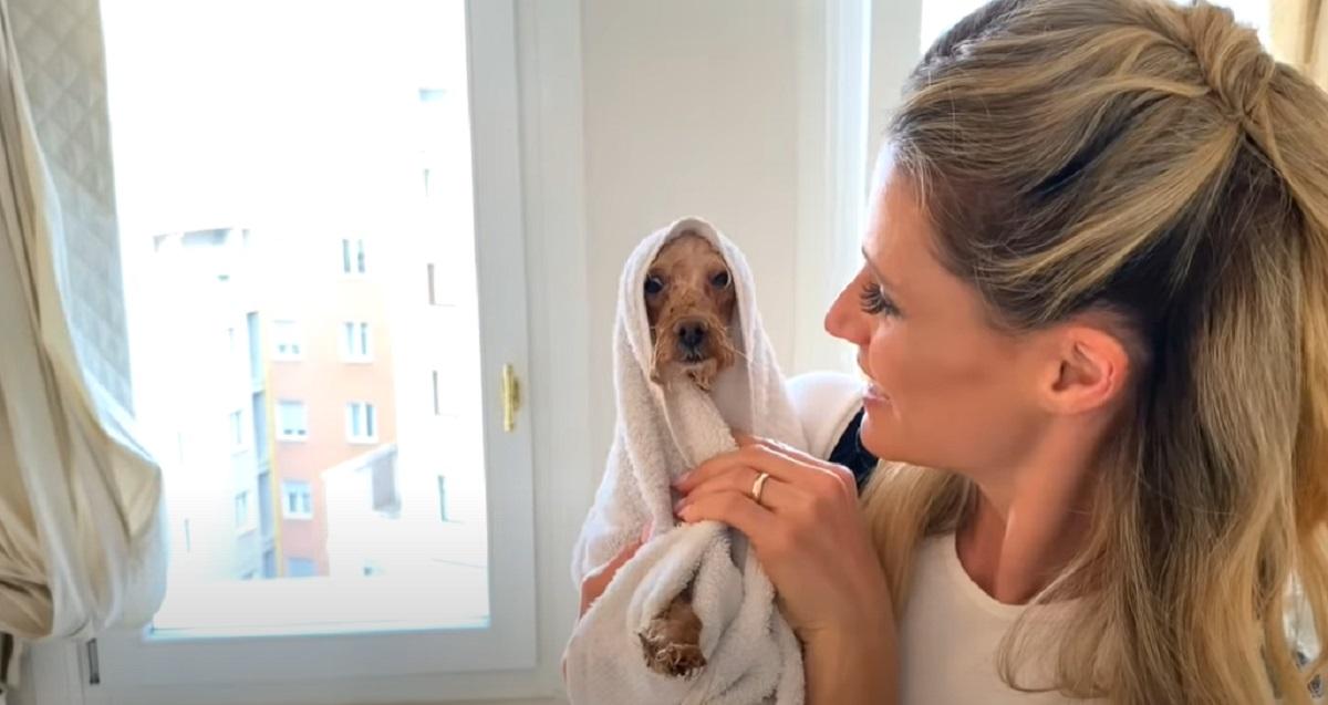 I cuccioli di Barboncino di Michelle Hunziker fanno il bagno, il video è di una dolcezza unica