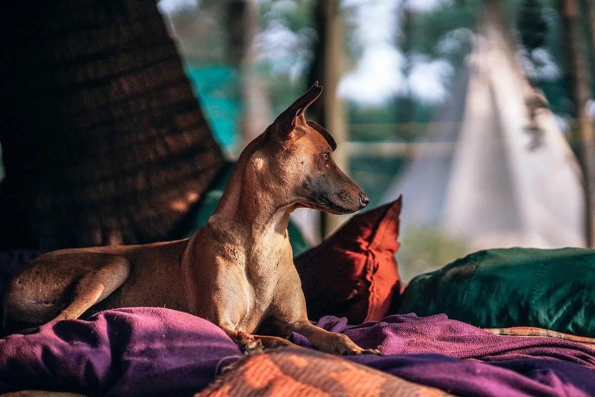 cane seduto sui cuscini