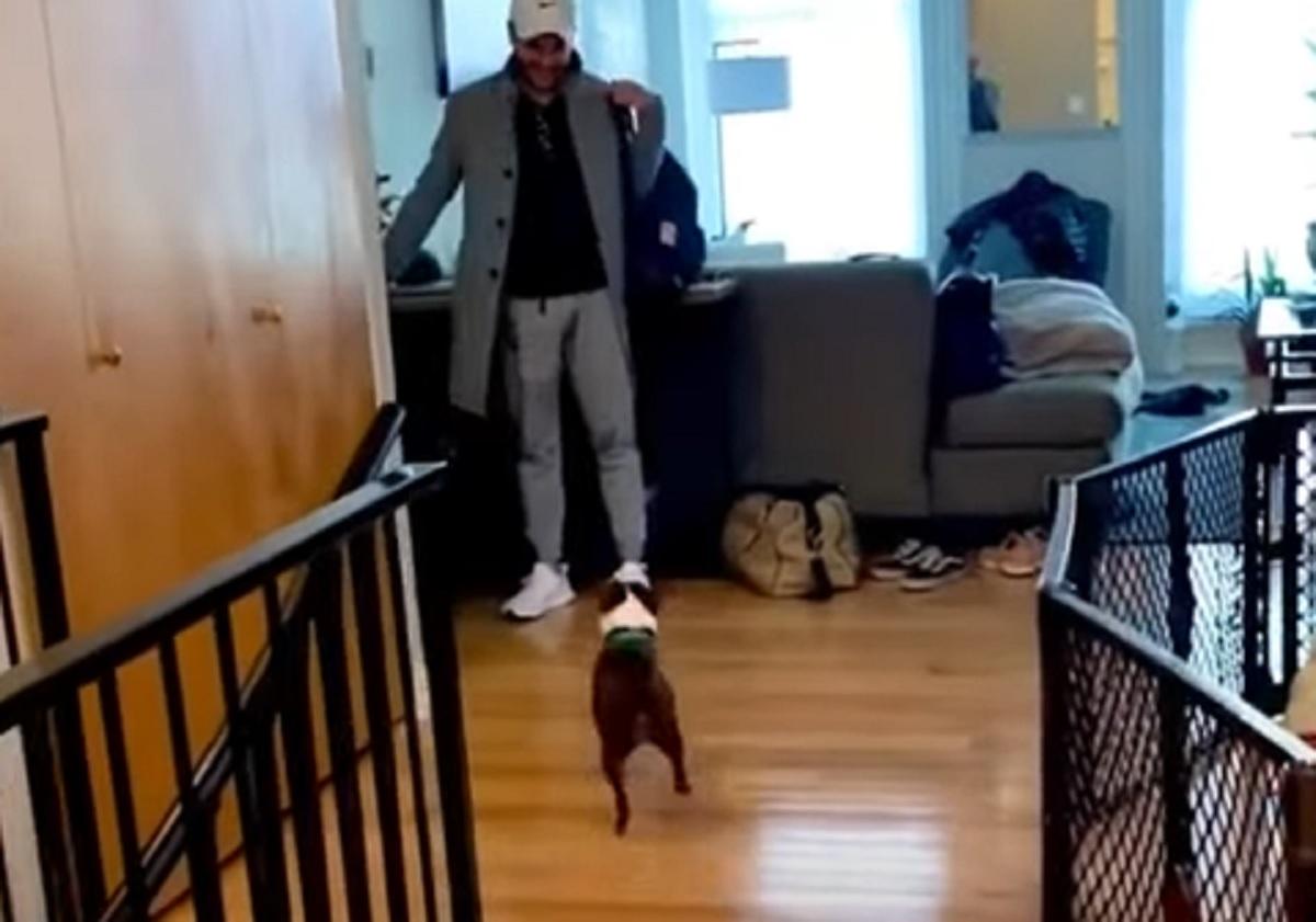 cane felice papà