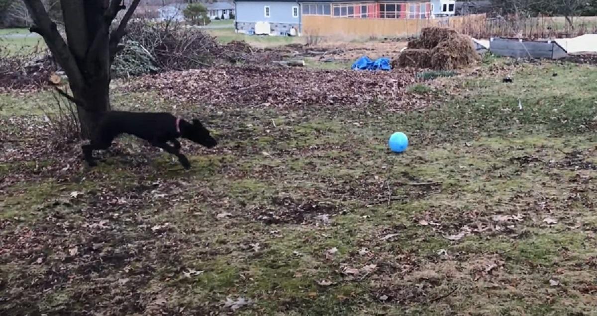 cane corre palloncino
