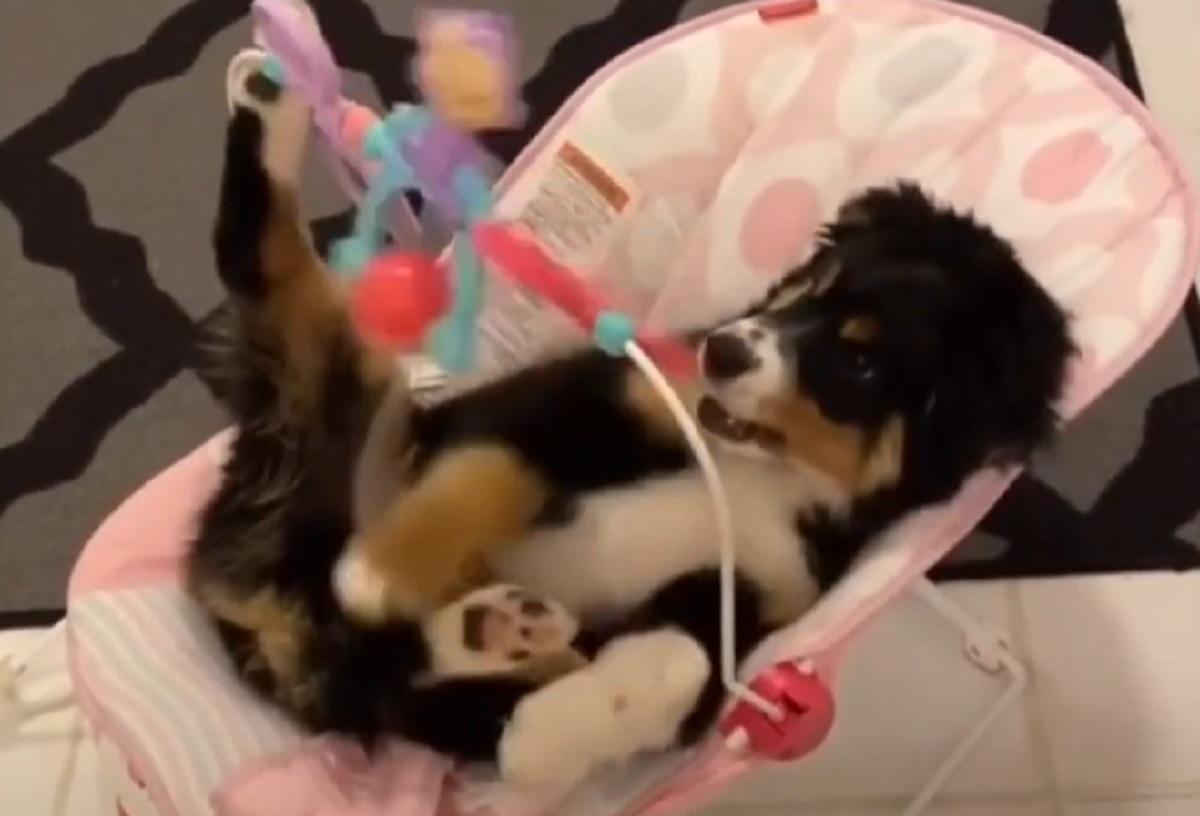 cucciolo gioca giocattoli