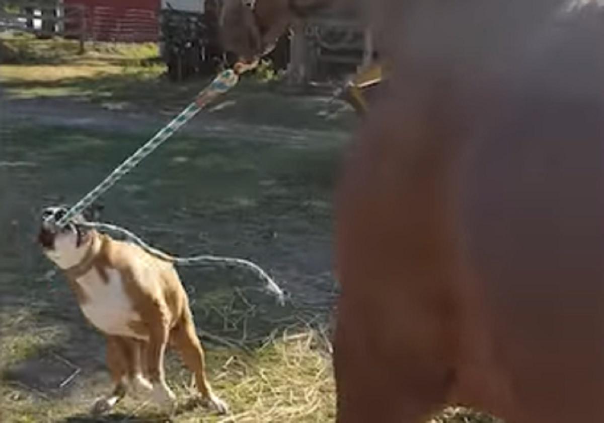 corda portare cavallo