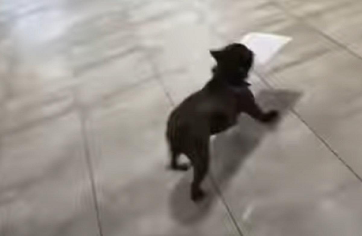 corre cane foglio