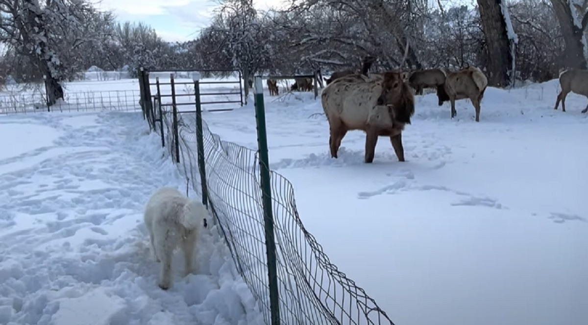 neve amici incontro