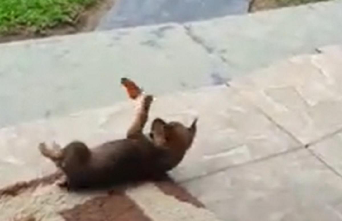 prova prendere farfalla