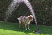cucciolo cane irrigatore