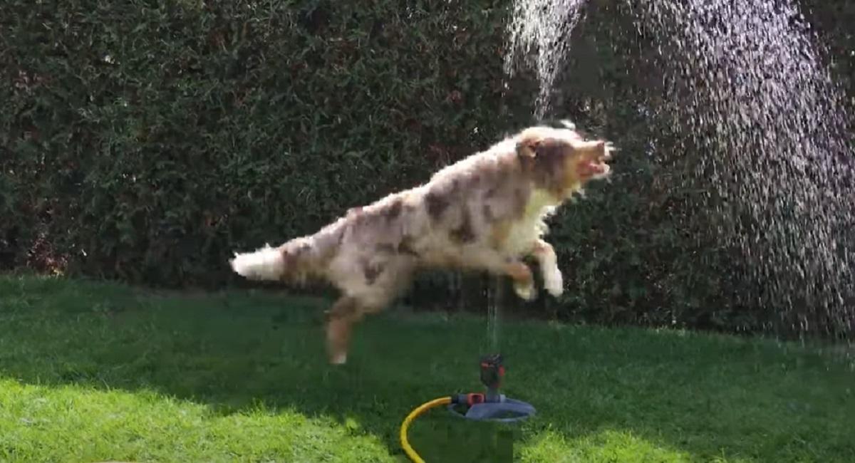 salto acqua cane