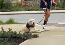 cucciolo cane passeggiata