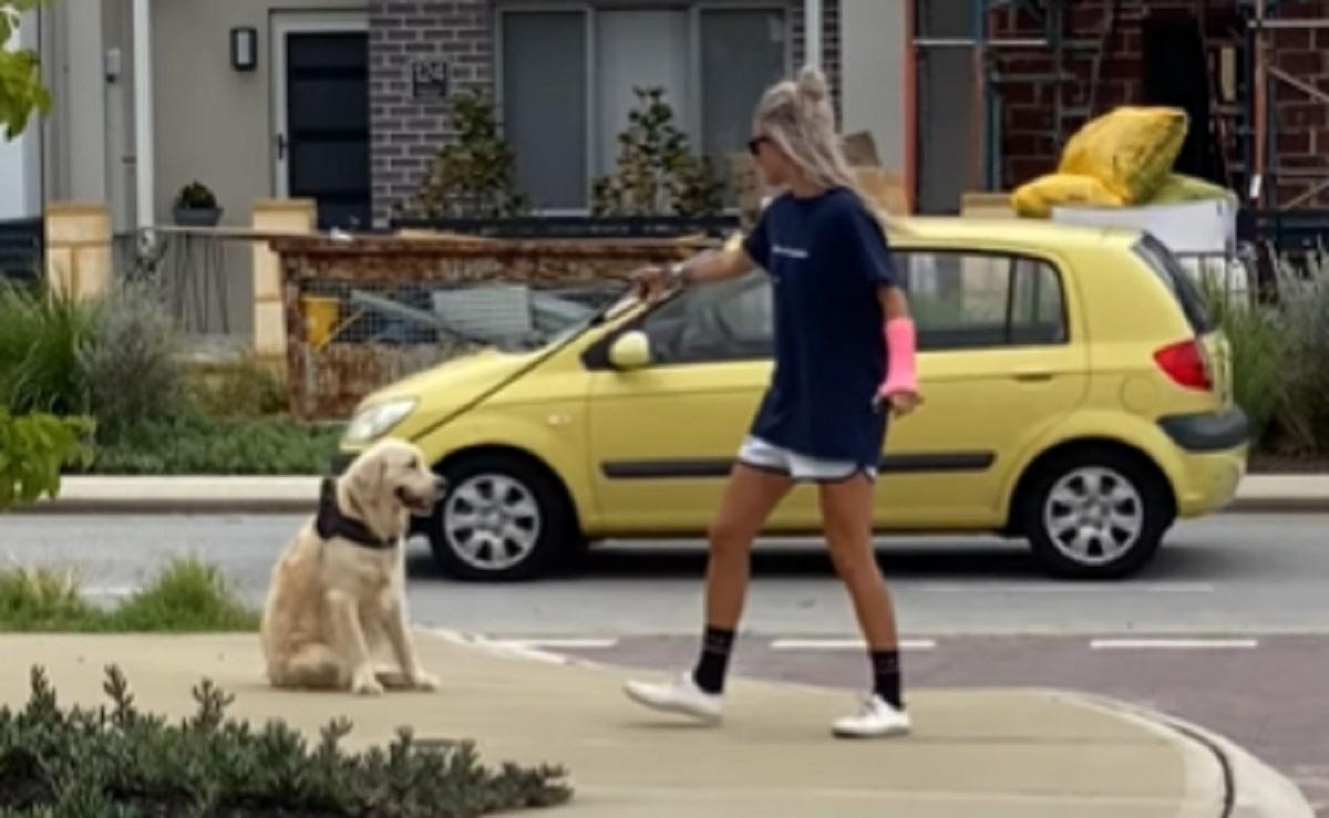 strada cane spasso
