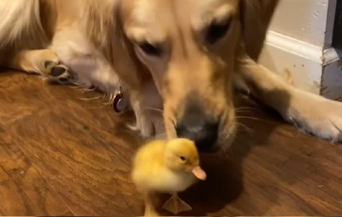 amicizia speciale cane