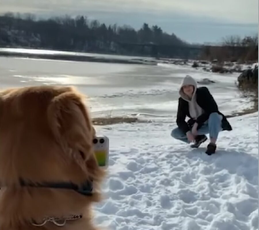 arrow cucciolo golden retriever fotografo professionista