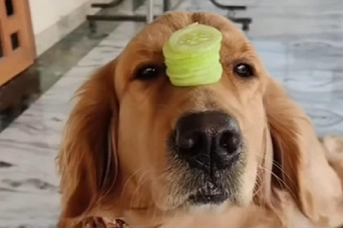 equilibrio cane fette