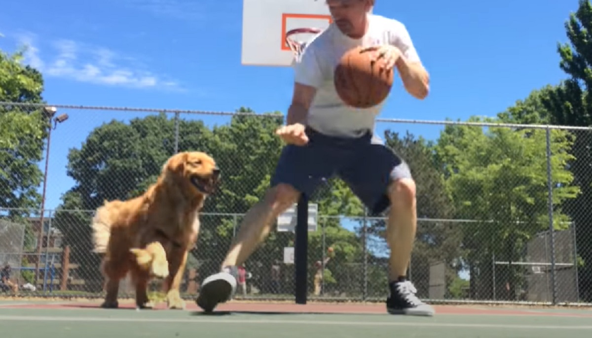Il cucciolo Golden Retriever gioca a basket con il papà, tutta l'imperdibile sfida in video