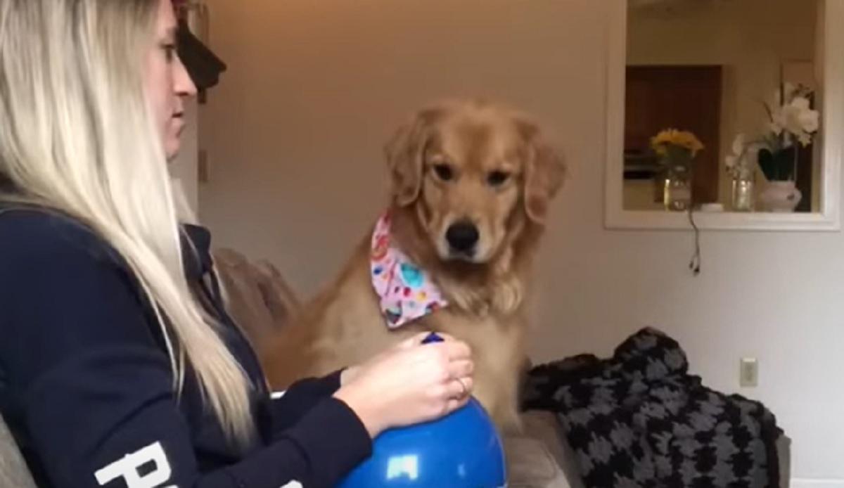 cane cucciolo golden