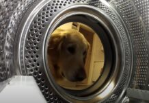 cucciolo cane orsacchiotto