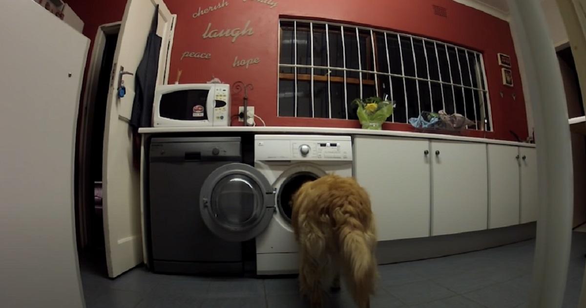 cane lavatrice testa