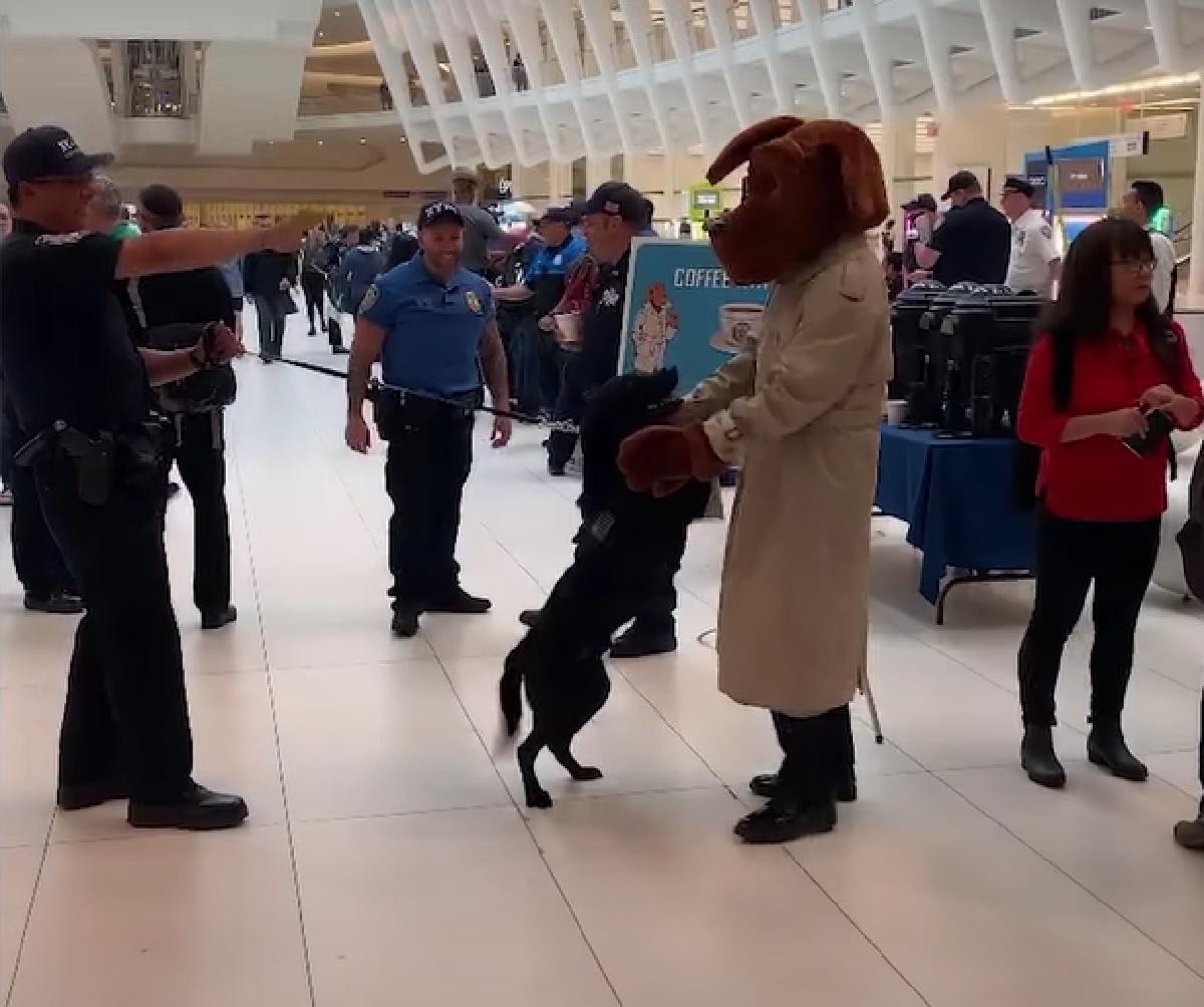 cucciolo labrador polizia momento tenero con mascotte