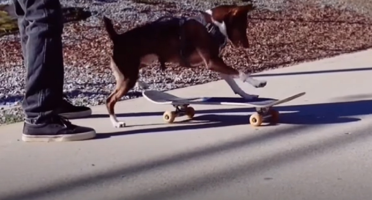 cucciolo cane skate