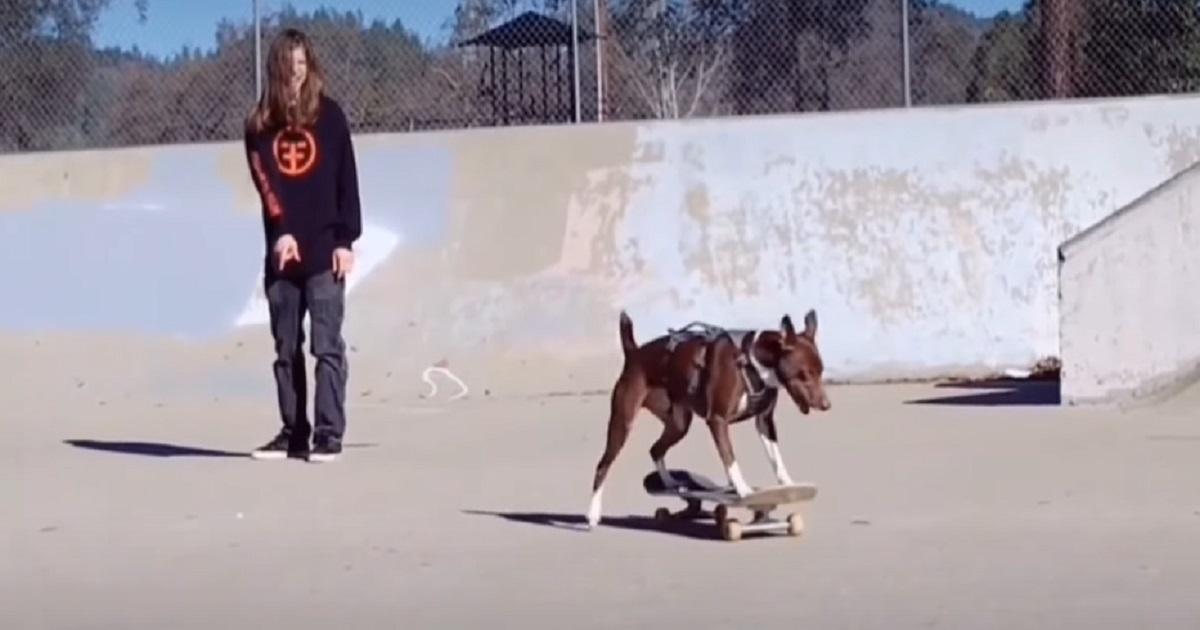 cane sfreccia skate