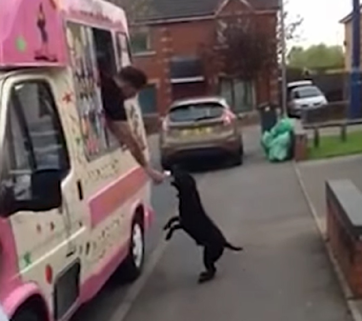 reggie cucciolo camioncino gelati arrivato