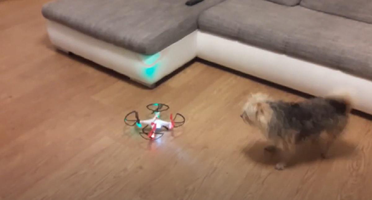 cane curioso giocare