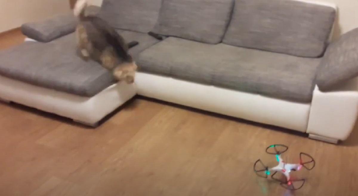 reazione buffa cucciolo