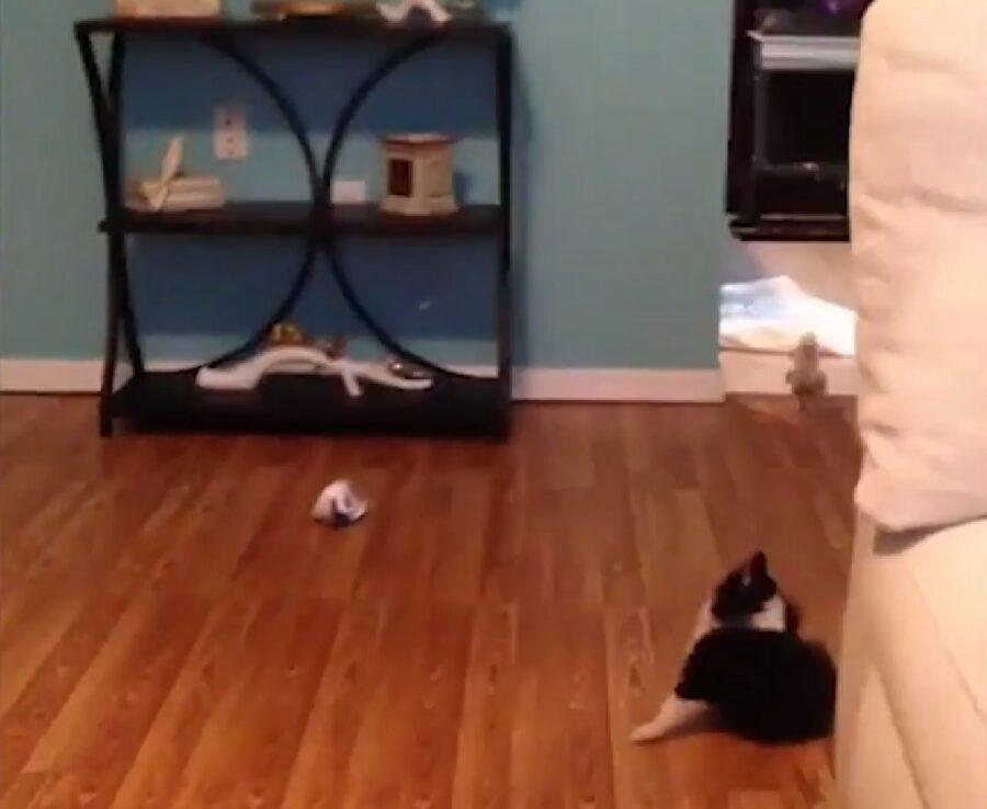 ranger cucciolo un pappagallo con il quale giocare
